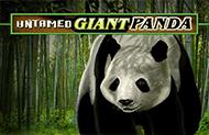 Игровой аппарат Untamed Giant Panda