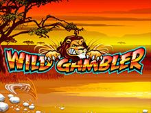 Крупная ставка в Wild Gambler повысит шанс вывести чистый выигрыш